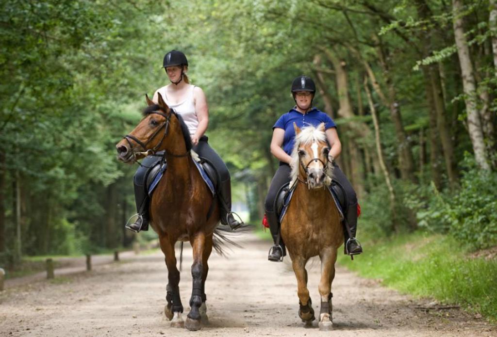 paard-rijden-erve-scholten-vakantiewoningen-hezingen-vasse-ootmarsum